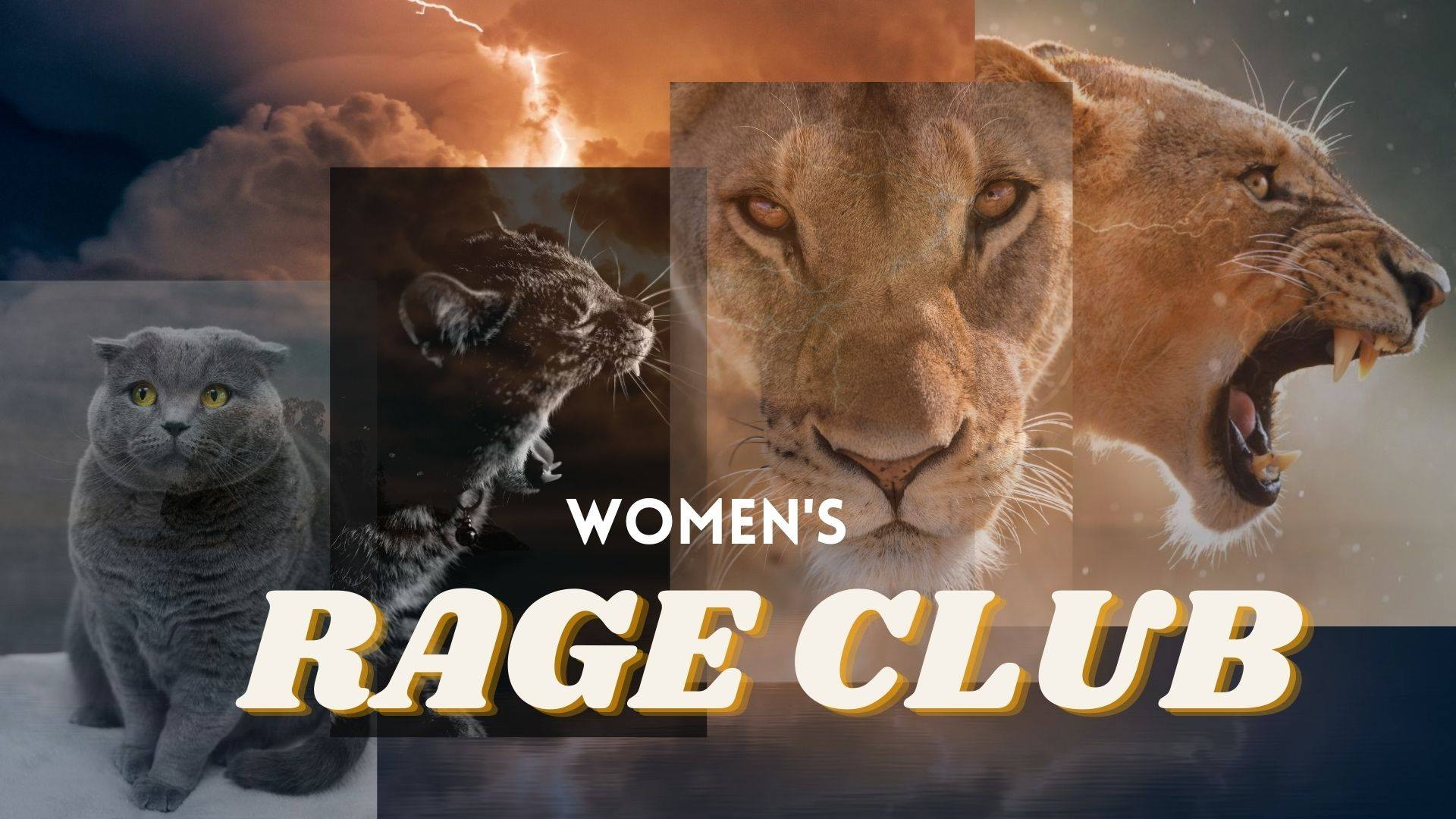 pictures of sweet cat, dangerous cat, lion, dangerous lion, inscription Women's Rage Club